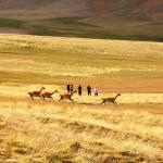 Patagonian Estancia & Safari Experience El Calafate