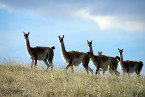 Brand new Safari Experience El Calafate