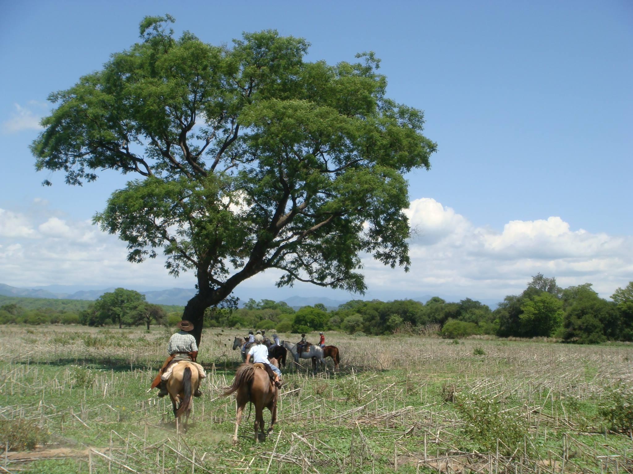 horseback-riding-at-el-bordo-de-las-lanzas-00