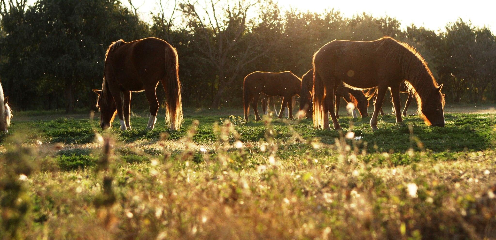 horses-at-el-bordo-de-las-lanzas