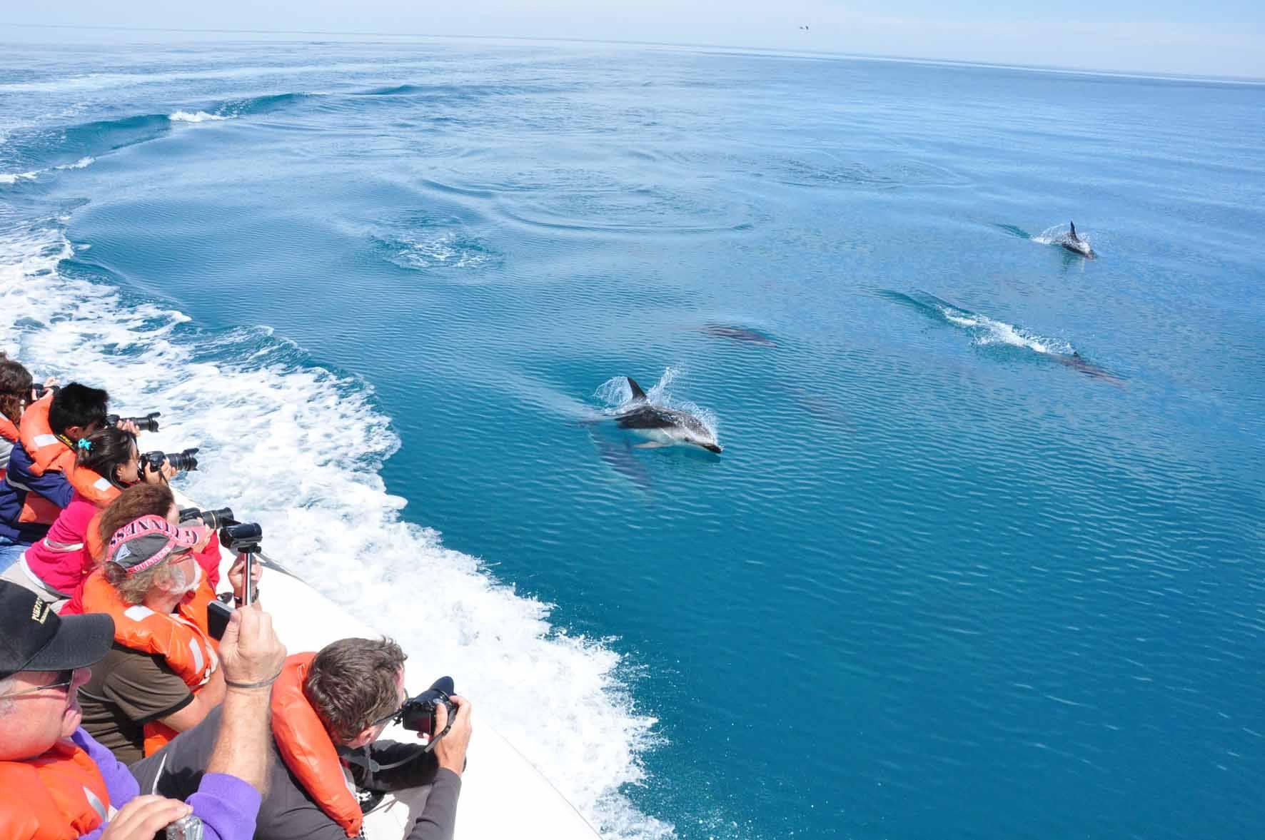 Dusky Dolphins_Puerto Madryn 06