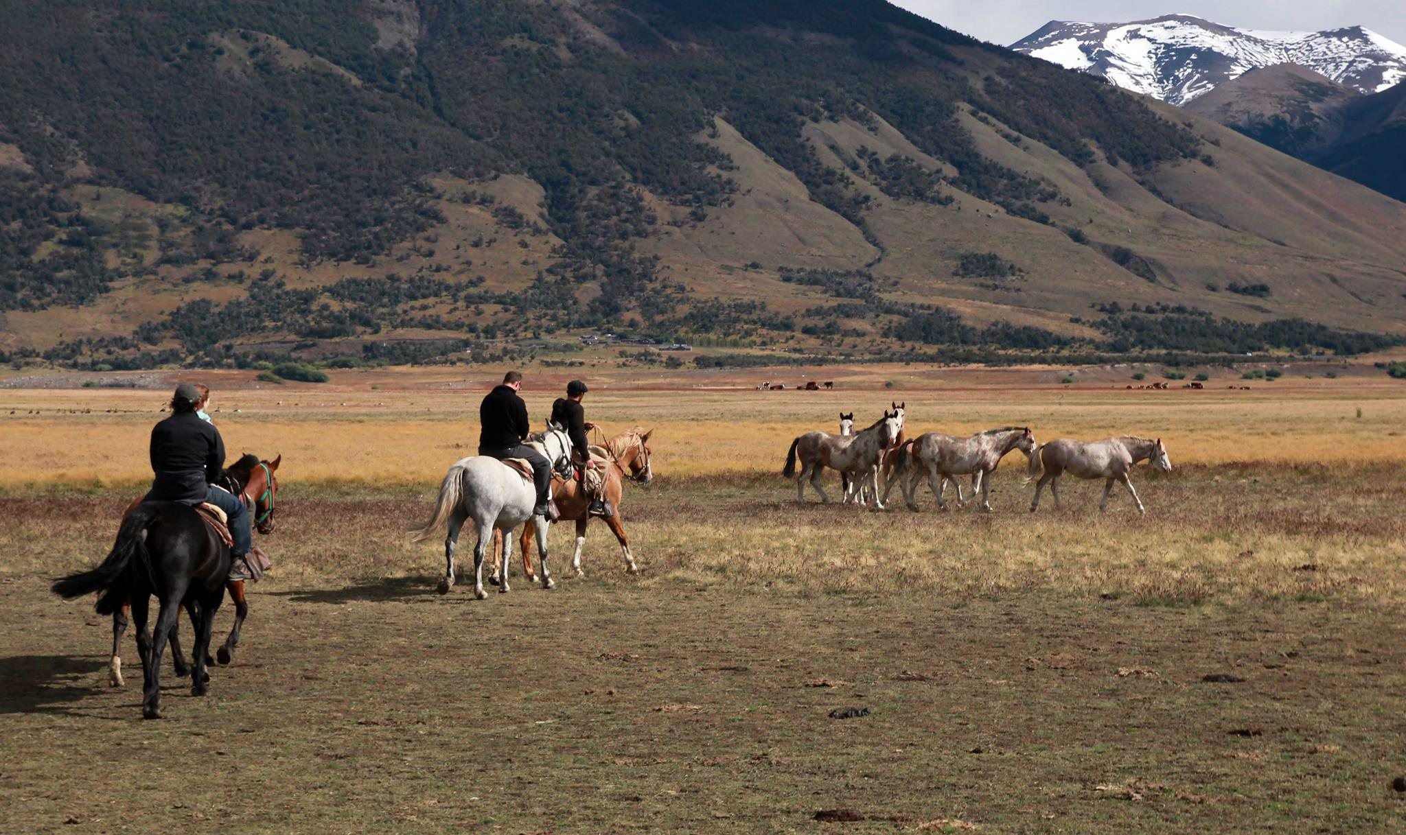 Riding the steppe
