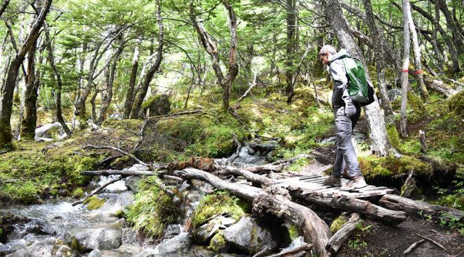 Trekking into the woods in El Chalten