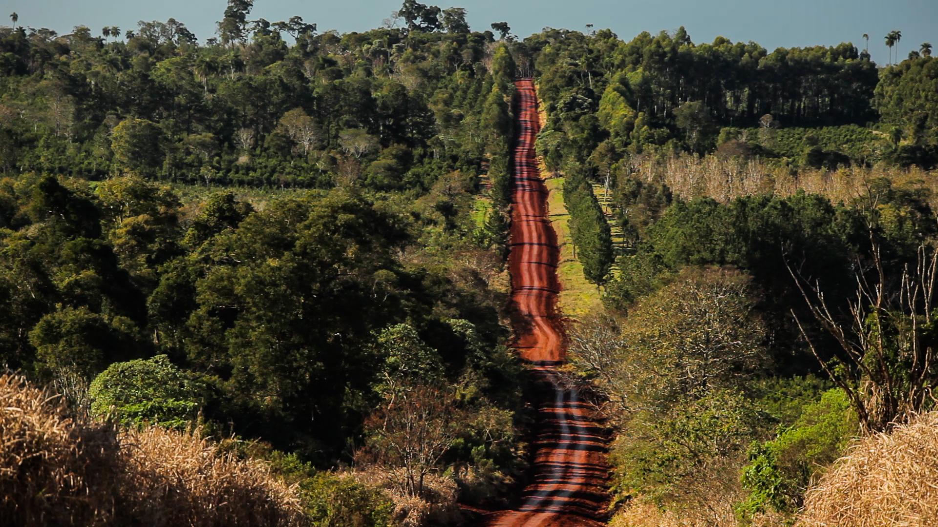Yerba Mate plantation trip_Yacutinga Origins