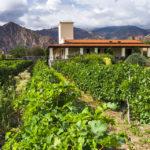 Viñas de Cafayate, vineyard framed hotel in Salta