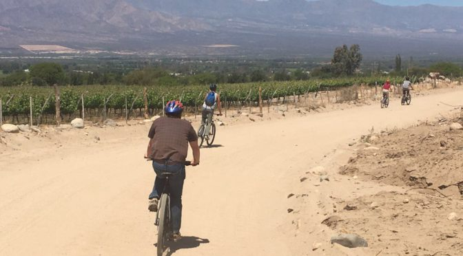 WINE TASTING AND MOUNTAIN BIKE DOWNHILL THROUGH VINEYARDS IN CAFAYATE