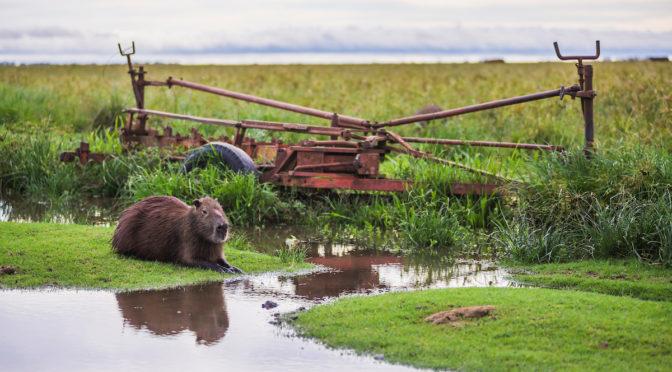 Wetland wildlife & tradition at Iberá