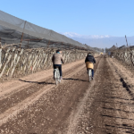 Bike ride & wine tasting in the vineyards of Mendoza