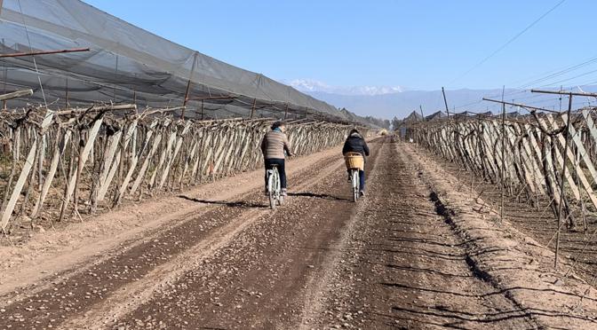 Bike ride & wine tasting in the vineyards of Mendoza