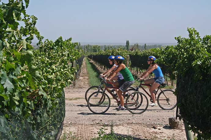 bike-tour-vineyards-1