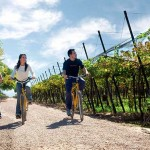 Self Bike through the Vineyards in Mendoza