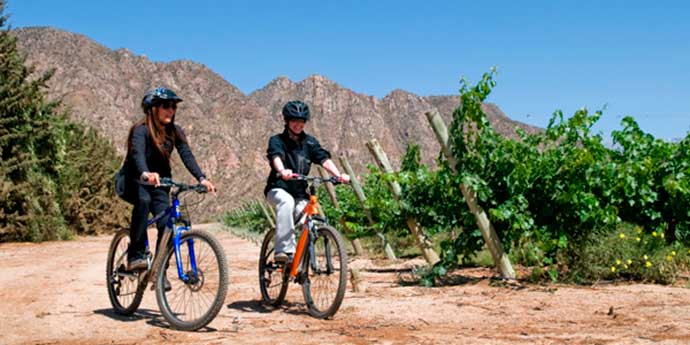 bike-tour-vineyards-3
